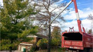 Tree Service Kettering Ohio Services Dayton Centerville Bellbrook Oh Sunset Tree