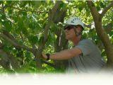 Tree Service Lawrence Ks Mulford 39 S Tree Service Tree Services Lawrence Ks