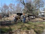 Tree Service Lawrence Ks Multiple Tree Removals Lawrence Ks forest Keepers