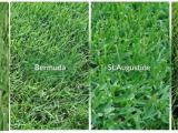Types Of Grass In Florida Have A Green Luscious Yard In Fl Hb Living On the
