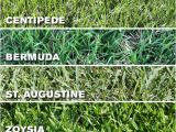 Types Of Grass In Florida which Grass Type Should I Use On My Tampa Fl Lawn