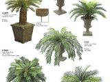 Types Of House Plant Palm Trees Palm Plant Types Patio Plants Potted Palms Palm Tree House