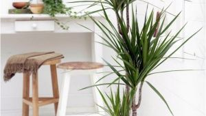 Types Of Indoor Palm Trees Indoor Palm Images which are the Typical Types Of Palm