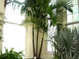Types Of Small Indoor Palm Trees Bring On the Palms Indoors Plantscapers