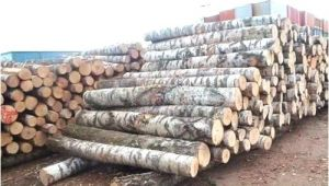 White Birch Logs Lowes White Birch Wood Logs Fireplace Insulation Panel Surga Info